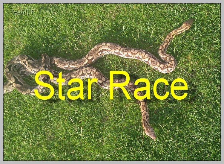 star race